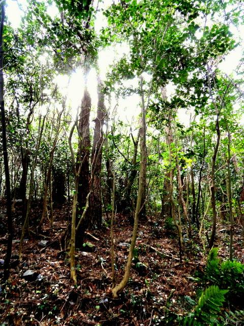 Heuksando Forest