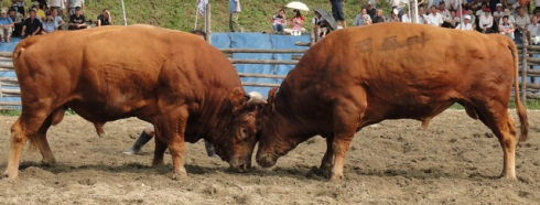 bullfighting 1