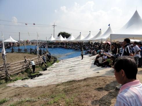 bullfighting 3