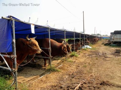 bullfighting 4