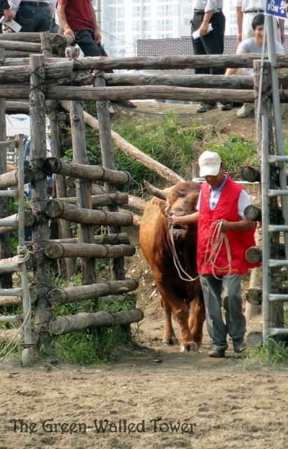 bullfighting 5