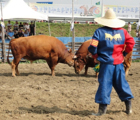 bullfighting 6