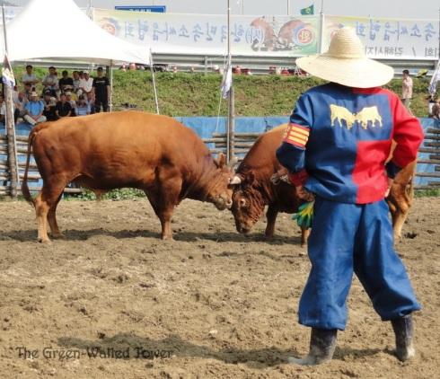 bullfighting 6