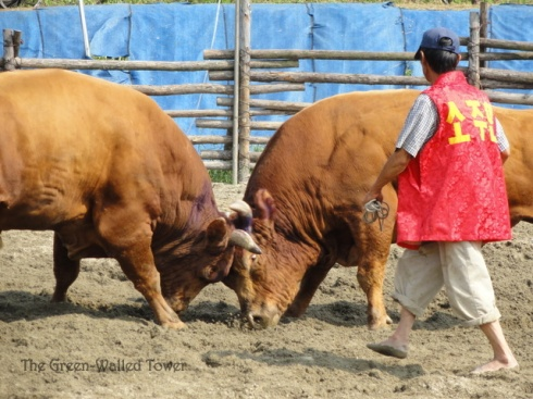 bullfighting 8