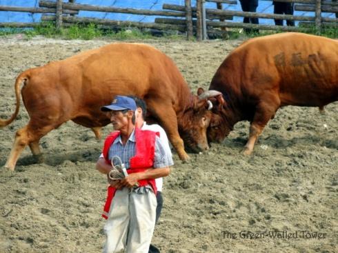 bullfighting 9