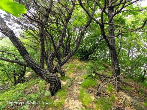 Hiking in Korea 10