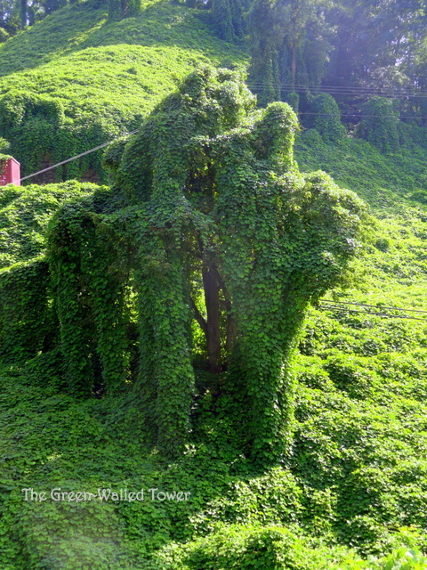 Much Ado about Kudzu