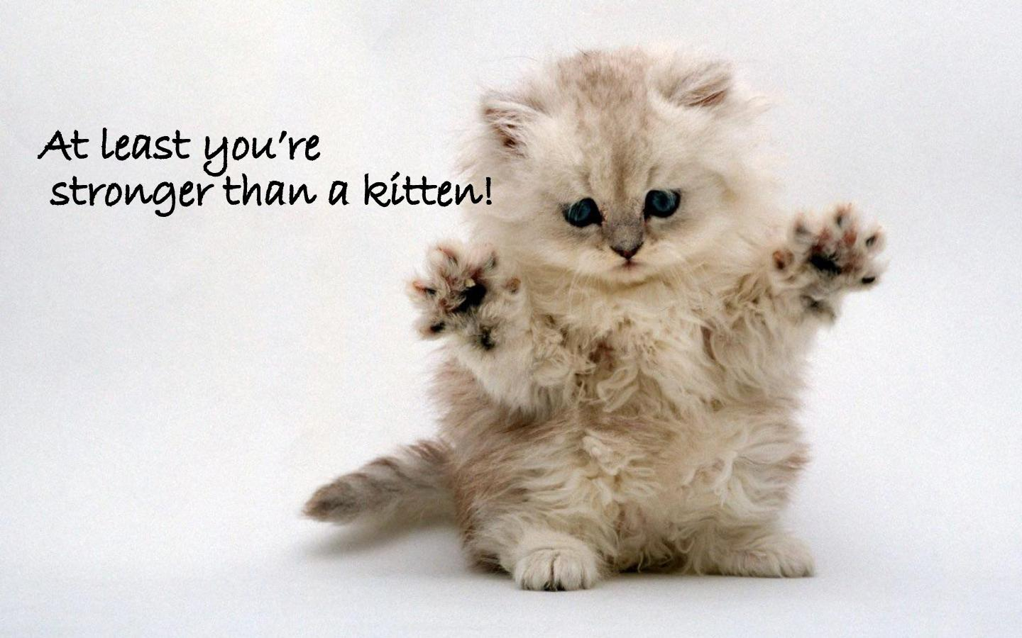 Cute Kittens With Funny Quotes. QuotesGram |Cute Kittens Quotes