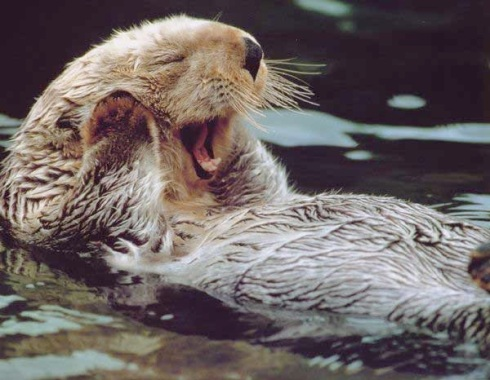 """Oh my gosh, that's such a great plan. Way to go!"" -Obsequious Otter"