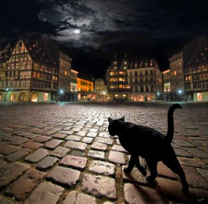 cat in city