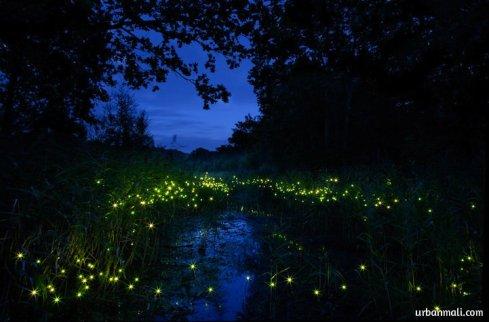 Firefly-Garden