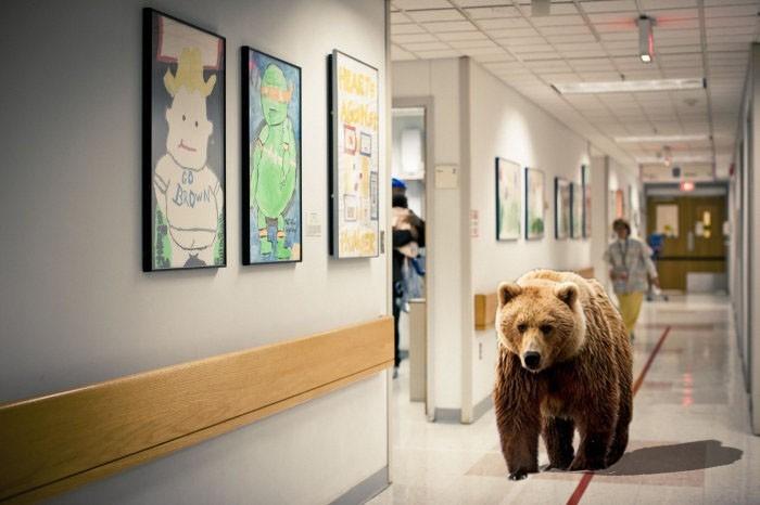 bear hall